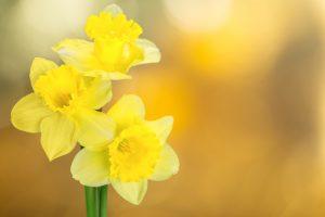 Allergies au pollen des fleurs