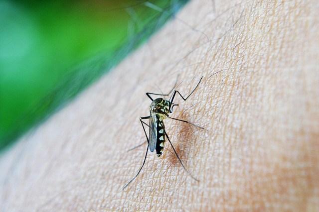 Attention aux piqures de moustiques
