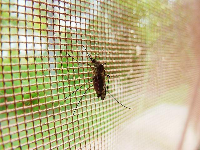 Bloquer les moustiques