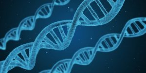 Gènes et ADN